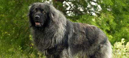 List of Dog Breeds  multilanguage  EuroBreedercom