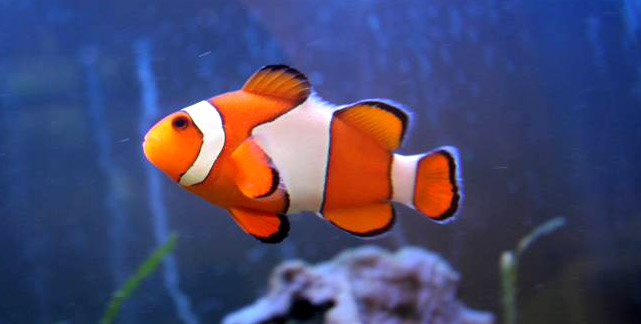 Finding nemo, images, image, wallpaper, photos, photo, photograph, gallery, oscar winner